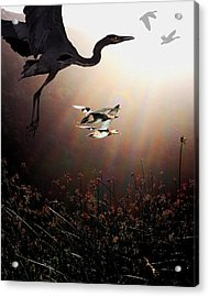 The Marsh Acrylic Print by Wingsdomain Art and Photography