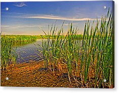 The Marshes Of Brazoria Acrylic Print