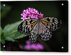 The Master Calls A Butterfly Acrylic Print