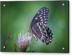 Acrylic Print featuring the photograph The Mattamuskeet Butterfly by Cindy Lark Hartman