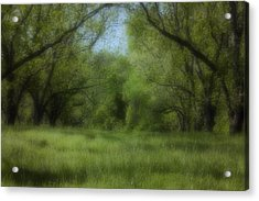 The Meadow Acrylic Print by Ayesha  Lakes