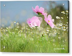 The Meadow Acrylic Print