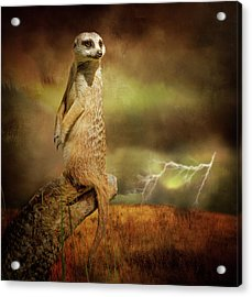 The Meerkat And The Storm Acrylic Print