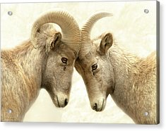 The Meeting Of The Minds Acrylic Print