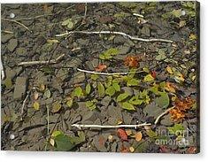The Menu Acrylic Print by Randy Bodkins