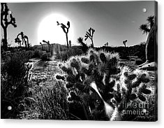 Merciless, Black And White Acrylic Print