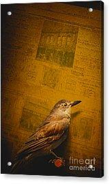 The Messenger Bird Acrylic Print