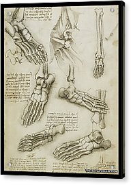 Acrylic Print featuring the painting The Metatarsal by James Christopher Hill