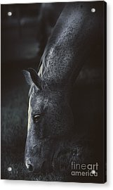 The Midnight Stallion Acrylic Print by Jorgo Photography - Wall Art Gallery