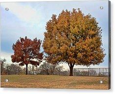 The Mighty Oak Acrylic Print by Joan Bertucci