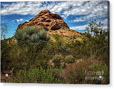 The Mighty Papago Acrylic Print