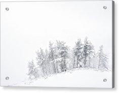 The Minimal Forest Acrylic Print