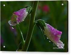 Acrylic Print featuring the photograph The Miracles Of Nature by Nicola Fiscarelli