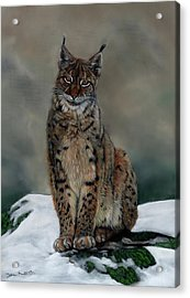 The Missing Lynx Acrylic Print