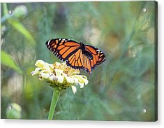 Acrylic Print featuring the photograph The Monarch Has Arrived by Brian Hale