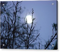 The Moon Acrylic Print by Liz Vernand