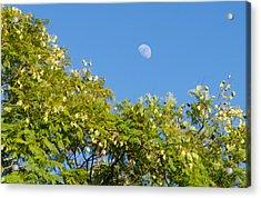 The Moonrise Acrylic Print