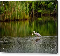 The Morning Catch Acrylic Print by Mark Miller
