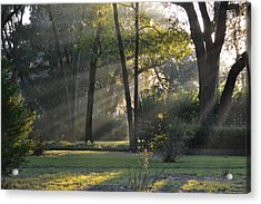 The Morning Sunlight Comes Shining Through Acrylic Print