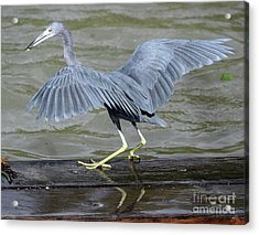 The Morsel After Scooch Acrylic Print