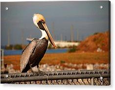 The Most Beautiful Pelican Acrylic Print by Susanne Van Hulst