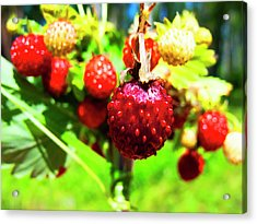 The Most Delicious In The Forest Acrylic Print