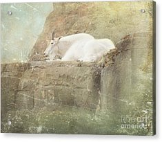The Mountain Goat Acrylic Print