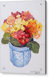 The Multicolored Primrose Acrylic Print by Joan Thewsey
