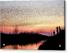 The Murmuration Makers Acrylic Print
