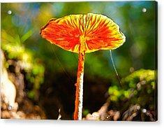 The Mushroom 10 - Ph Acrylic Print by Leonardo Digenio