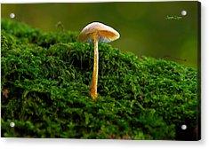 The Mushroom 15 - Mm Acrylic Print by Leonardo Digenio