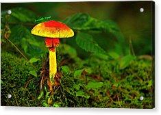 The Mushroom 16 - Pa Acrylic Print
