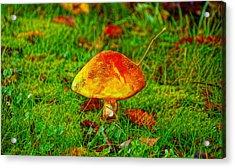 The Mushroom 19 - Da Acrylic Print by Leonardo Digenio