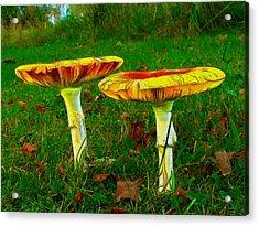 The Mushroom 8 - Da Acrylic Print by Leonardo Digenio
