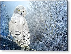 The Mystical Snowy Owl Acrylic Print by Brian Tarr