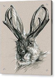 The Mythical Jackalope Acrylic Print