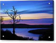 The Naked Tree At Sunrise Acrylic Print by Semmick Photo