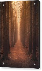 The Narrow Path Acrylic Print