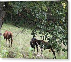 The Neighbors Horses Acrylic Print by Janis Beauchamp