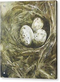 The Nest Acrylic Print by Donna Thomas