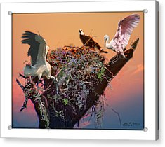 The Nest Acrylic Print by John Breen