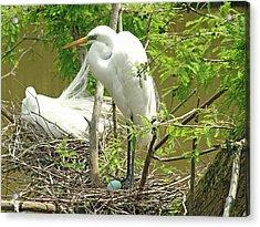The Nest Acrylic Print