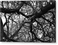 The Neural Net Acrylic Print by Tracey Myers