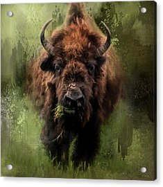 The Nibbler Bison Art By Jai Johnson Acrylic Print by Jai Johnson