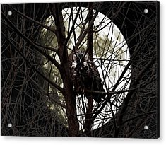 The Night Owl And Harvest Moon Acrylic Print by Wingsdomain Art and Photography