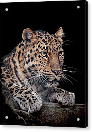 The Night Watchman Acrylic Print