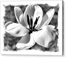 The Notecard Acrylic Print by Karen Scovill