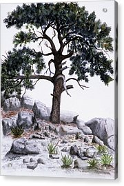 The Offering Tree Acrylic Print by Tom Dorsz