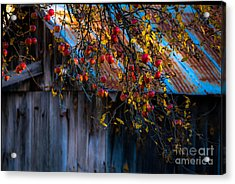The Old Barn Acrylic Print by Sherman Perry