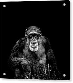 The Old Boy Acrylic Print